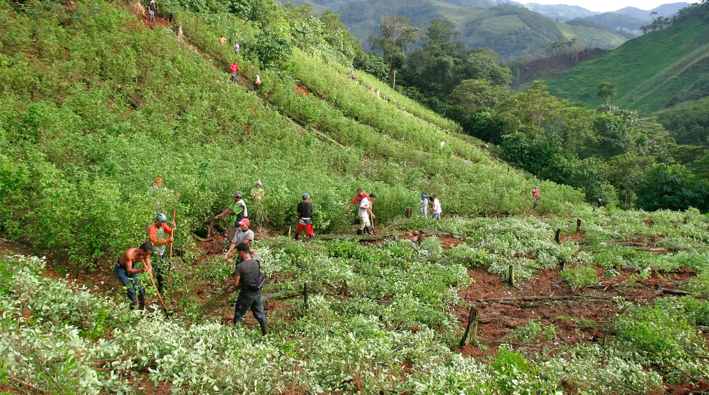 Nueva inversión para familias vinculadas al Programa de Sustitución de Cultivos anunció el gobierno