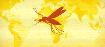La OMS advierte presencia de fiebre amarilla en Venezuela